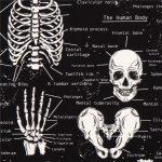 Anatomie Phosphorescente